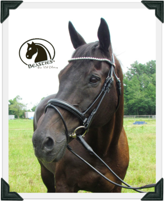 Dressage Brilliance Rolled Bridle