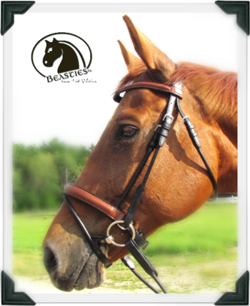 two tone rolled crocodile bridle